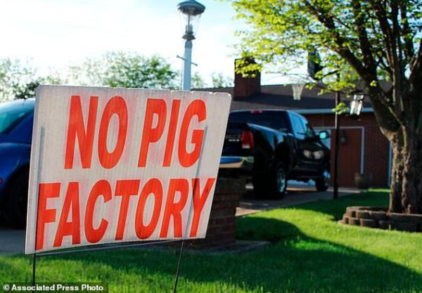 Last gasp for hog farm suit: 'We don't want to be ...