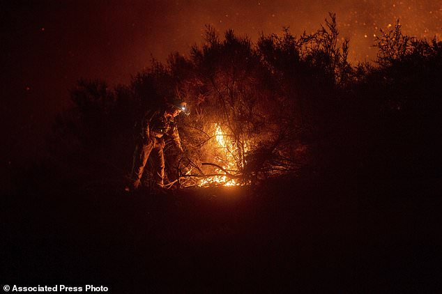A firefighter ignites a misfire as he fights Ranch Fire, part of the Mendocino Complex Fire, on Tuesday, August 7, 2018, near Ladoga, California. (AP Photo / Noah Berger)