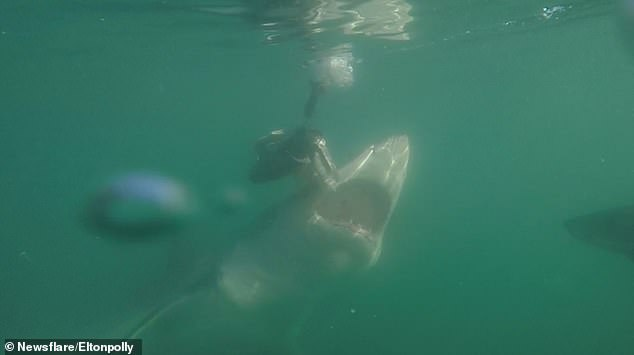 The incident is said to have shocked the caged divers who saw the attack unfold
