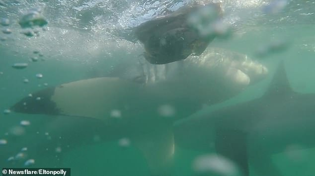 Thedramatic footage was captured by divers in Mossel Bay off the south coast of South Africa