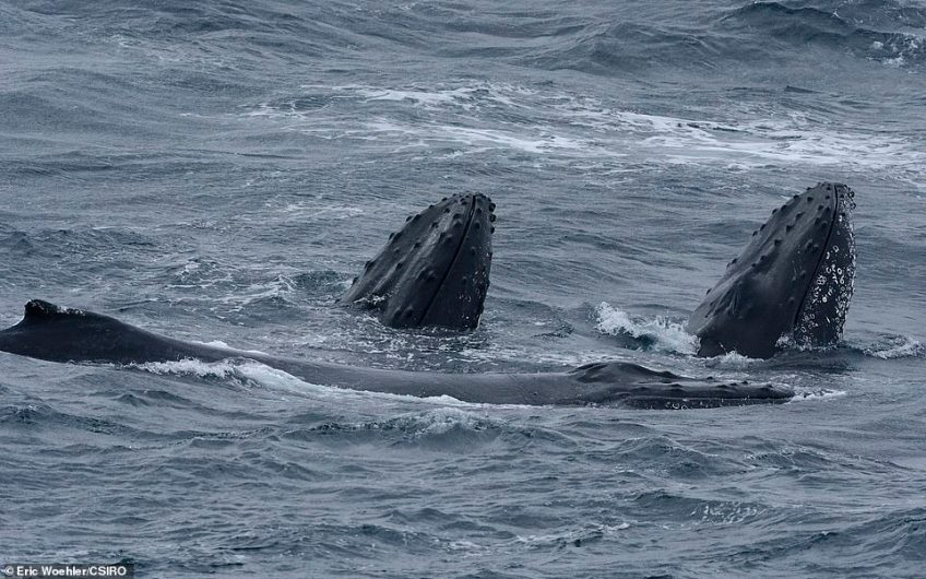 Whales may use these seafloor features as navigational aids during their migration, the researchers say