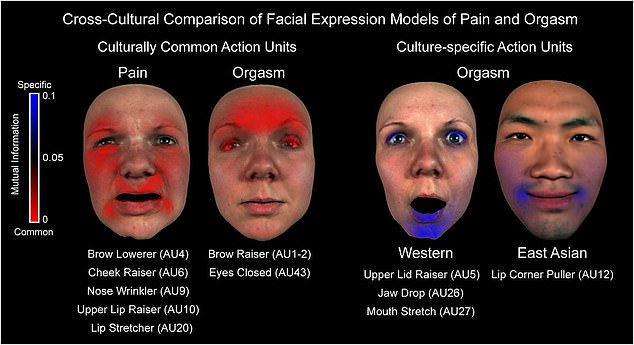 Researchers created a computer program that could mimic a variety of facial expressions, using a core set of 42 movements,like mouth stretching, eyelid raising and jaw dropping