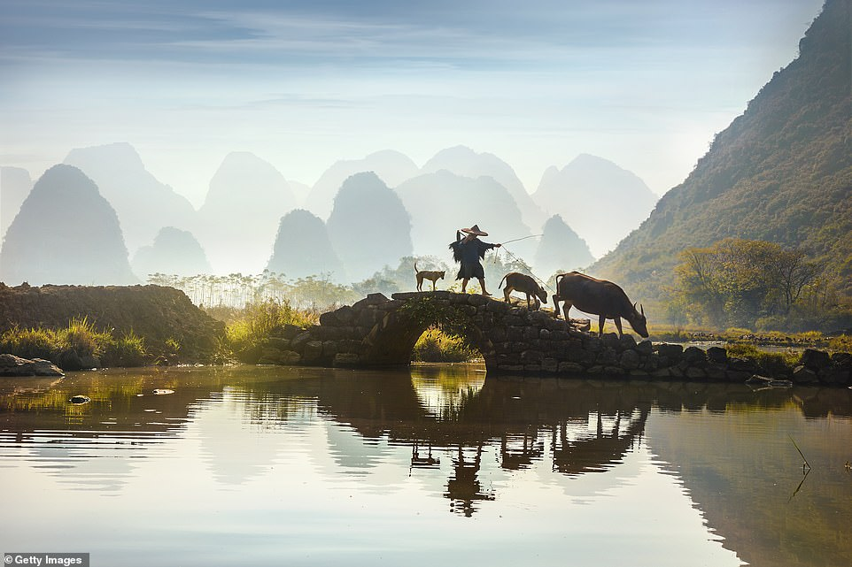 A farmer leads his water buffalo over a stone bridge in the Guilin region. Water buffalo are the most important animal for these farmers as they are able to cultivate the flooded rice fields