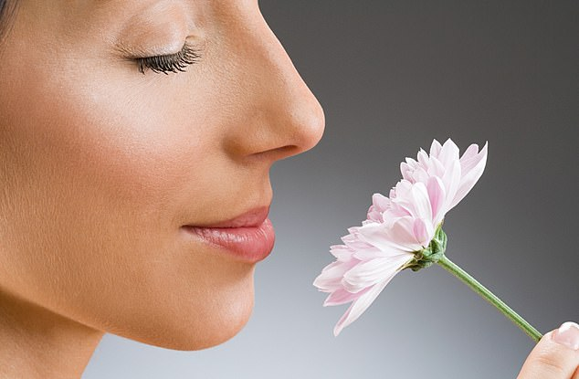 Fact: Studies from the 1960s describe the possible harmful effects of diabetes on the sense of smell