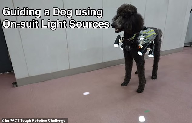 """A YouTube-approved video shows exactly how the new system works. the dog (in this case a poodle) is equipped with a vest that has """"suitable light sources"""" that shine on the ground in the direction it should go"""