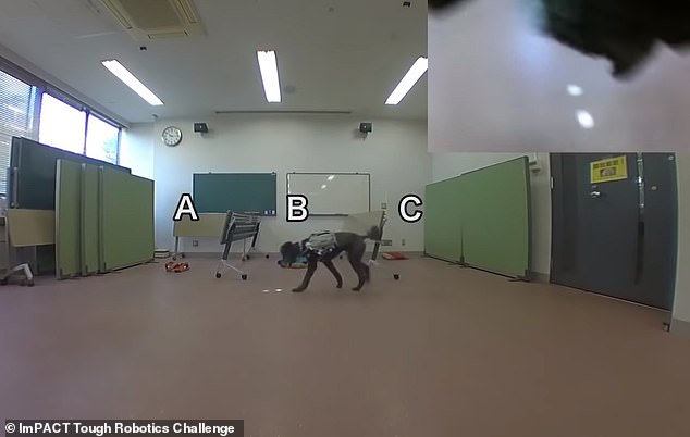 Recordings of recent experiments with the system show how a dog can be directed to an object of interest and even navigate objects by simply following a point of light