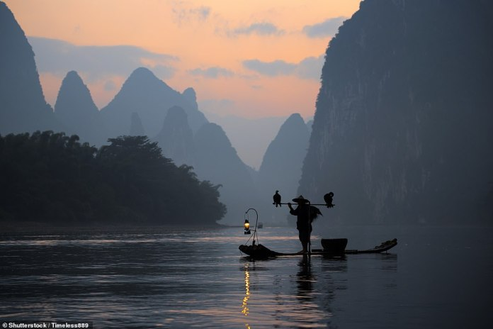 Cormorant fishing in China is a practice that dates back at least 1,000 years. The birds dive and catch fish for their masters, but are prevented from swallowing large catches with a noose tied around their throats. This beautiful picture was taken in Guilin