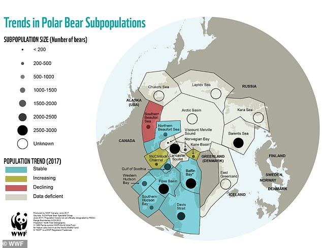 The controversial report claims that nine polar bear subpopulations are increasing in size. This is in stark contrast to the estimates of conservationists.