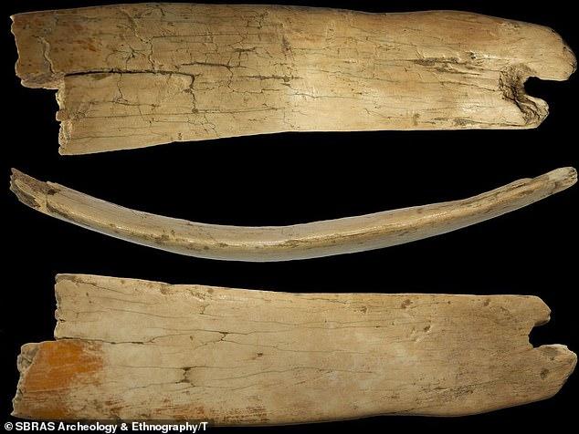 Propio de la naturaleza: la tiara del hombre se fabricó a partir de los colmillos de una bestia que probablemente fue cazada por los habitantes de las cuevas en las famosas montañas Altai de Rusia.