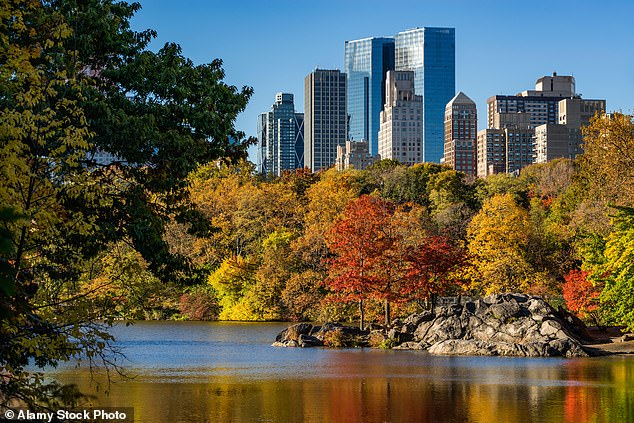Most visitors think of New York's Parks, such as Central Park, pictured, as the only place to find trees. However,a  new study found New York City has  over 5 million 'forested natural areas' along with 666,000 street trees.