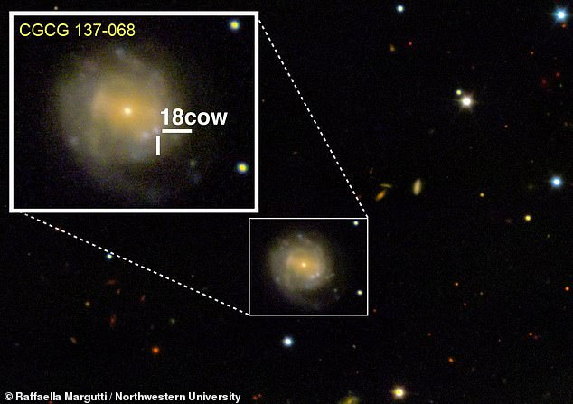 A bright flash occurred last summer in the constellation Hercules and labelled 'the Cow' (pictured). It was similar to a supernova but up to 100 times brighter and much shorter lived with particles flying out of it at a staggering 10 per cent of the speed of light