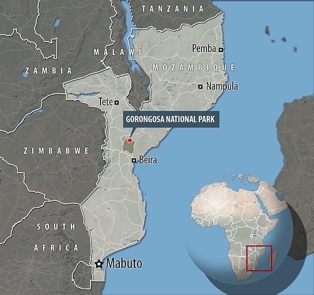 Nahezu 90 Prozent der Elefanten im Gorongosa-Nationalpark in Mosambik wurden im 16-jährigen Bürgerkrieg des Landes für Elfenbein geschlachtet