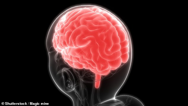 Patients with Alzheimer's could have their memory improved by unblocking blood vessels in the brain, scientists hope on the back of a mice model study