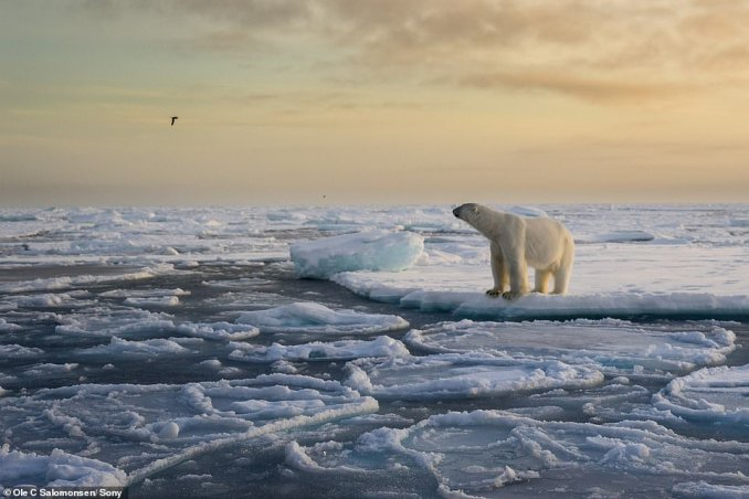 Award-winning photographer Ole Salomonsen has revealed his top tips for capturing the Arctic wild in all its glory