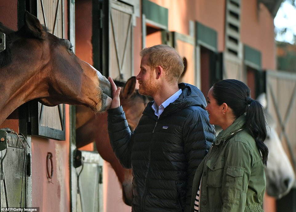 Harry, who is a keen polo player, was a natural with the horses who appeared to take a liking to the prince