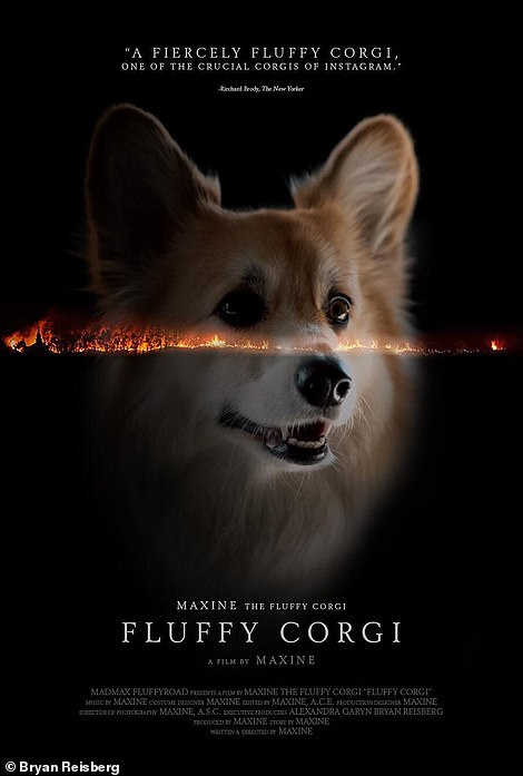 Getting into character: The adorable pup can be seen making the same expression as First Reformed actor Ethan Hawke on her version of the poster, Fluffy Corgi