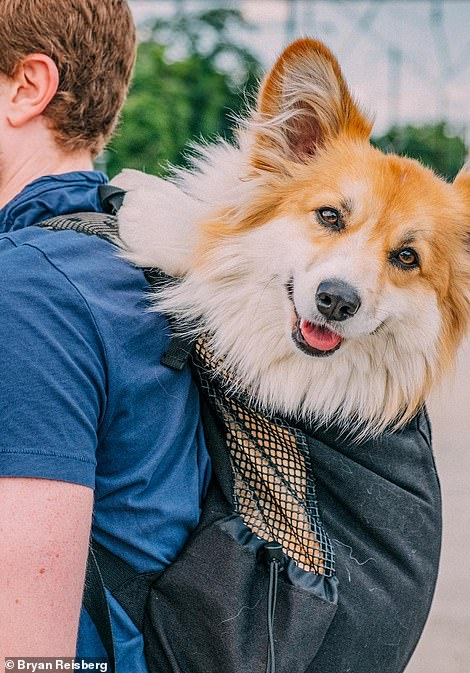 Pooch on board:Maxine found fame a few years ago when Bryan was seen riding the New York City subway with the pup in his backpack