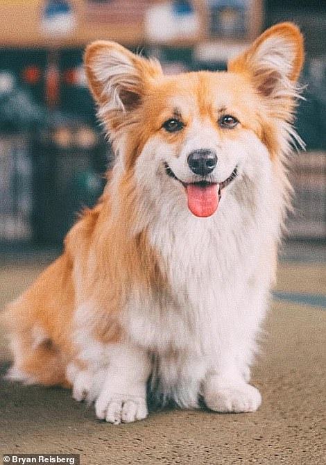 Too cute:Not only did hearts melt, but the dog's social media page got a huge boost. She now has more than 135,000 Instagram followers