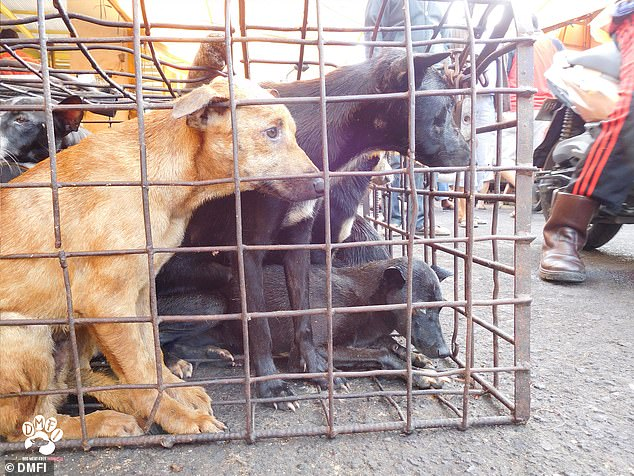 Terrified Dogs Wait To Be Blow-Torched And Dismembered At 'hellish