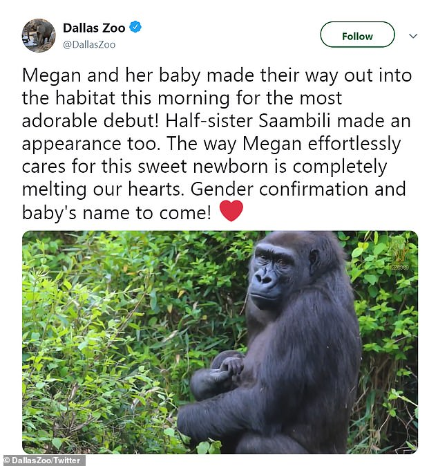 The Dallas Zoo revealed the infant gorilla in a sweet video posted on Twitter Thursday
