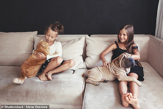 Non-owners of pets and pet owners have similar happiness levels but there is a noticeable divide within the latter. People were asked if they consider themselves to be 'very happy' and, of this group, 36 per cent of them were dog owners. In comparison, only 18 per cent of these 'very happy' individuals were cat owners (stock)