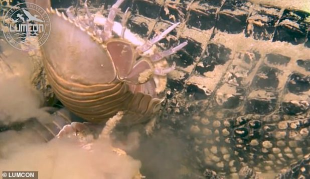 In the video, the scientists observed some of the creatures that huddled in the shell until they were almost completely motionless