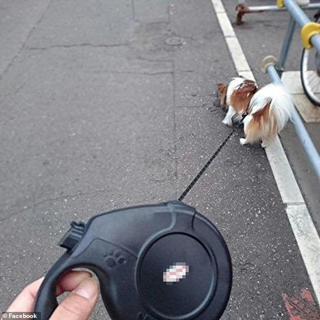 Retractable leads like this one have caused debate among dog owners with some saying they offer freedom while others saying they are dangerous