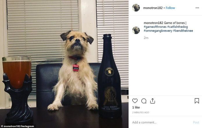Dog life: A Game Of Bones would have been better for one pooch on Instagram