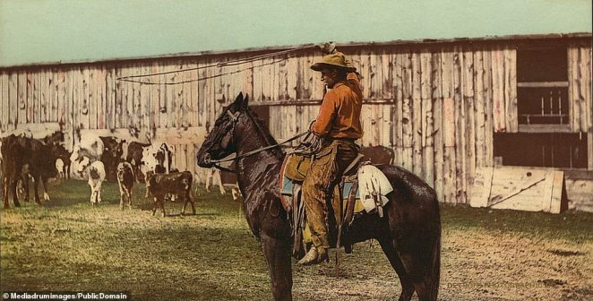 A talented cowboy swings his lasso. The cowboy became the symbol of the white settlers of the late 19th century, often depicted in popular culture as a glamorous or heroic figure. The reality was different and often they lead hard lives struggling to survive in the brutal wilderness of the plains and the lawless West