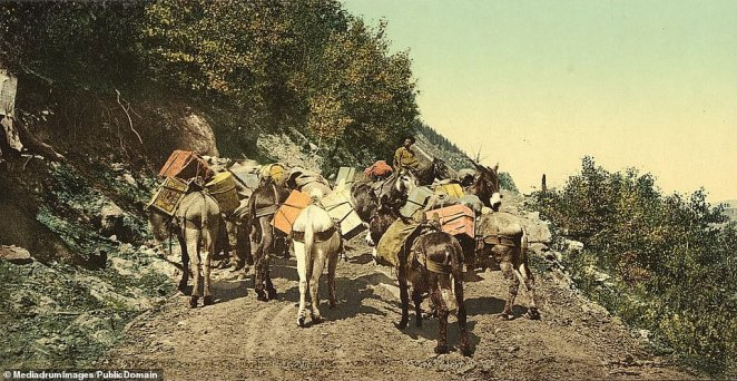 A pack train on a treacherous mountain road in the Colorado Rockies. Gold was first discovered bya group of Cherokee on their way to California over the Cherokee Trail when they found gold in a stream bed in the South Platte basin, near present-day Denver.The information remained unused for around a decade until it reached William Green Russell, a Georgian who was married to a Cherokee woman and had worked the California gold fields in the 1850s. He sent an exploration party to the area