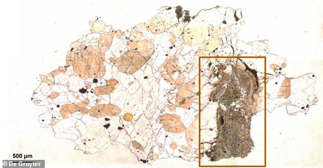 The meteorite is claimed to contain 'biosignatures', which researchers describe as textures and features left behind by organisms. The image shows a thin section of ALH-77005 in plane polarised light, with the area studied area marked by a brown rectangle