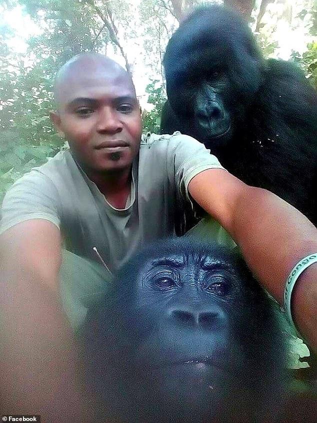 https://i1.wp.com/i.dailymail.co.uk/1s/2019/04/20/15/12508798-6942325-Virunga_National_Park_in_the_Democratic_Republic_of_Congo_has_60-a-47_1555770932676.jpg?w=736&ssl=1