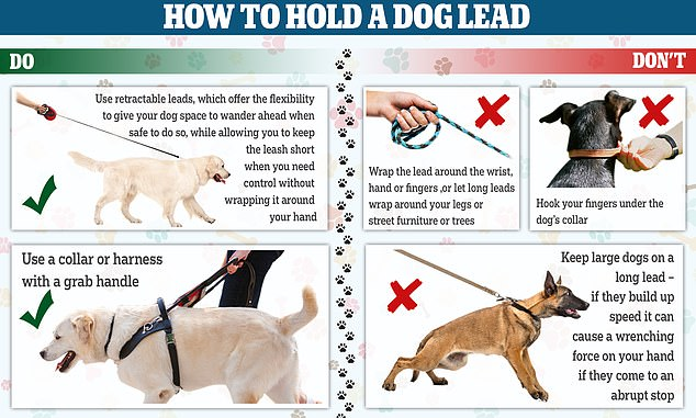 A guide to how you should use a dog lead (left) and how you shouldn't, or risk getting an injury