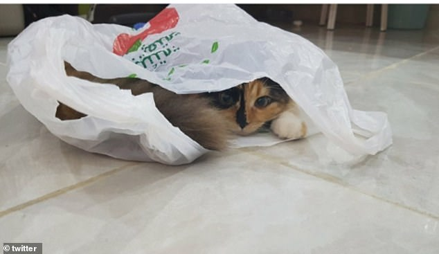 Hide and seek! Another user, from the Middle East, shared this snap of their kitten hiding inside a plastic bag