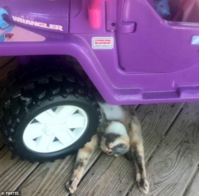 Take me for a drive! One cute kitten from Florida appeared desperate for a ride as he rested underneath a toy car