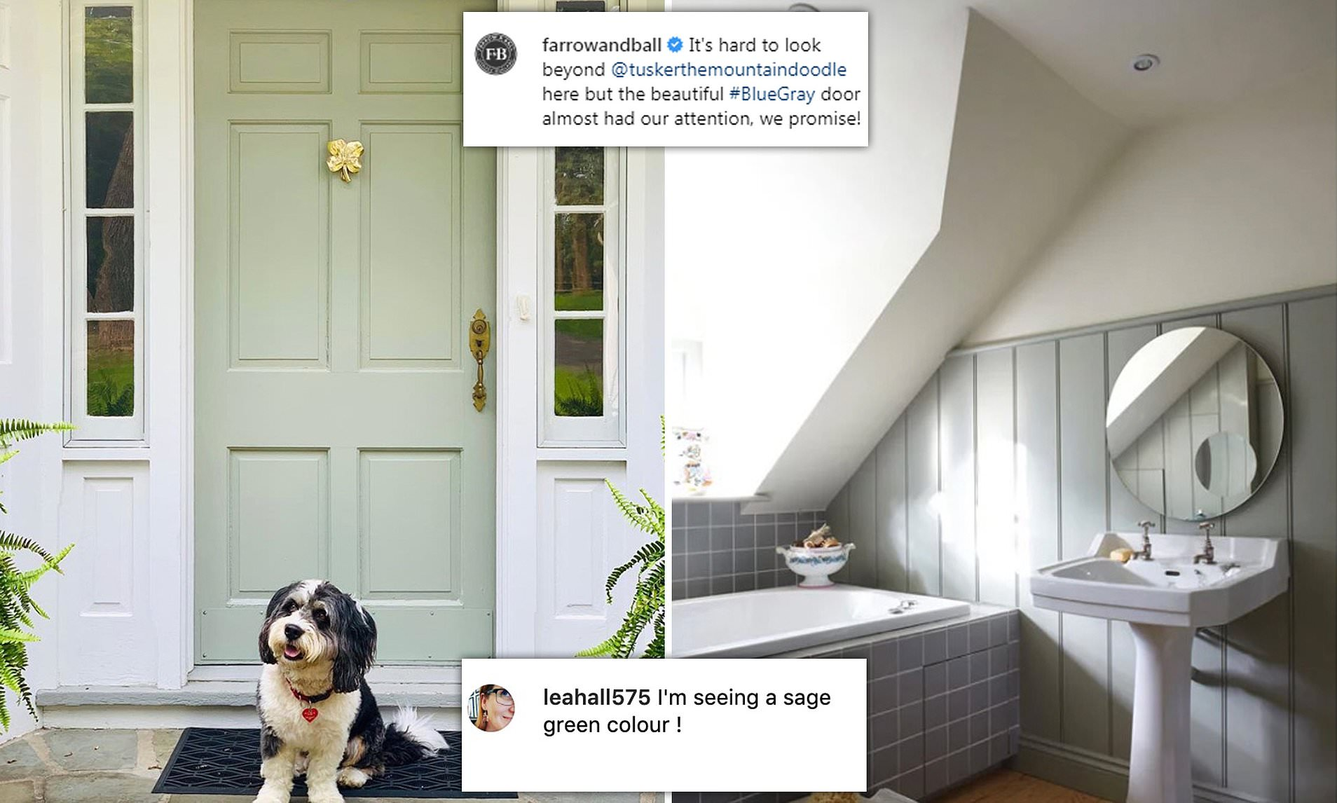 Upmarket Paint Company Mocked On Social Media After It Described A Sage Green Shade As Blue Gray Daily Mail Online