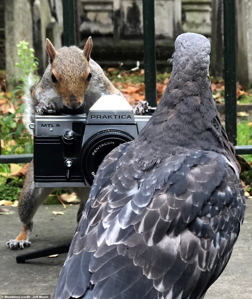 Adorable pictures capture the creatures placing their paws on the equipment as some curious pigeons appear to act as their photography subjects