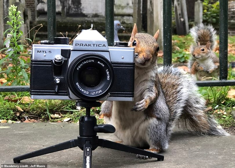 Mr Moore placed his camera on the ground to capture the squirrels himself, but the curious creatures quickly took over
