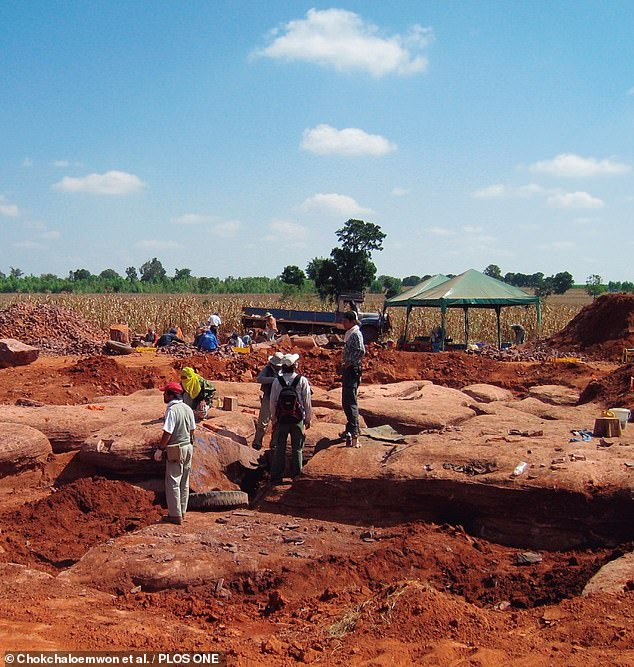 The remains — which belonged to four individuals of the new species, dubbed Siamraptor suwati — included skull, backbone and hip fossils. Pictured, the dig site in Thailand