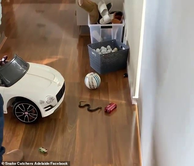 The mother, who is eight months pregnant, and her two-year-old child entered the main living area of their Upper Sturt home in Adelaide on Monday. As they went to play with her children's toys, they discovered the snake hiding amongst between a soccer ball and a toy car