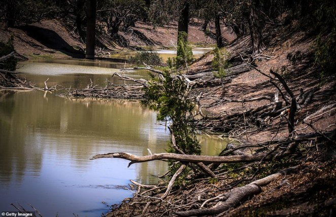 Dead trees line the banks of thethe Barwon River, near Walgett in northern New South Wales