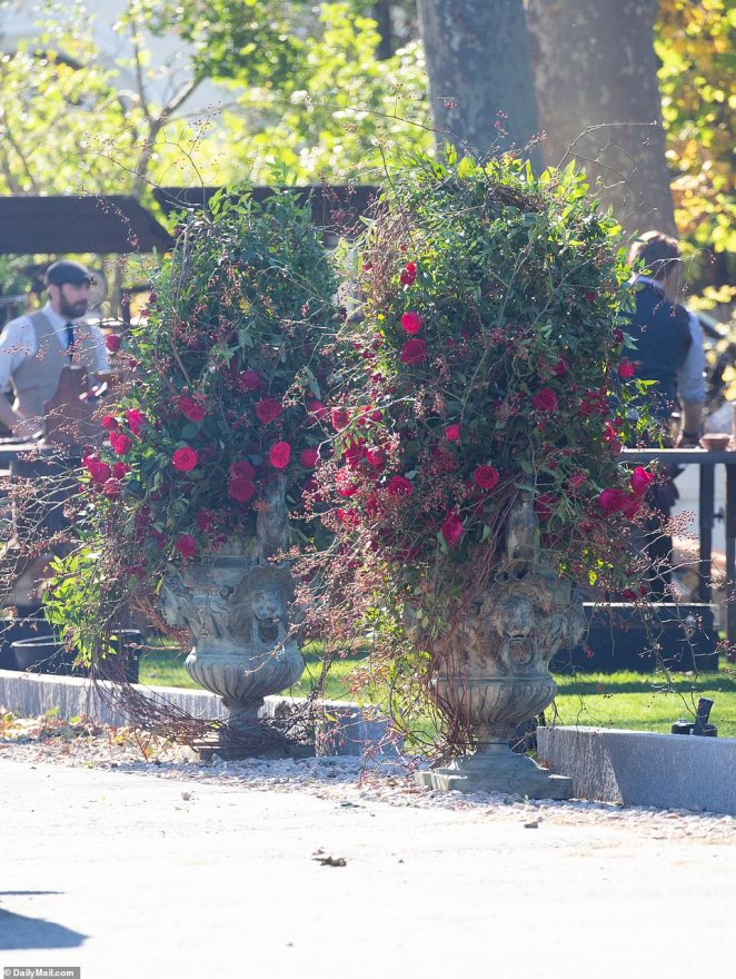 Stunning roses in bloom radiate in the sunlight as the decorate the mansion in Rhode Island