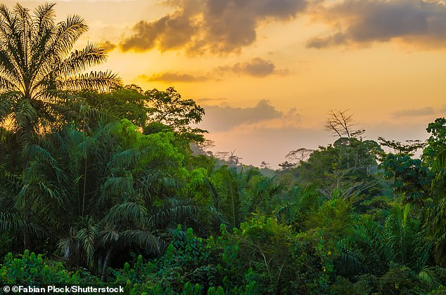Liberia is in the eighth-best country berth. Pictured is a sunset over its protected rainforest