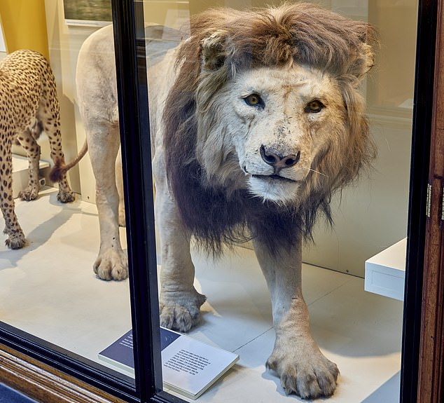 Mane man: A lion exhibit at the Natural History Museum in London