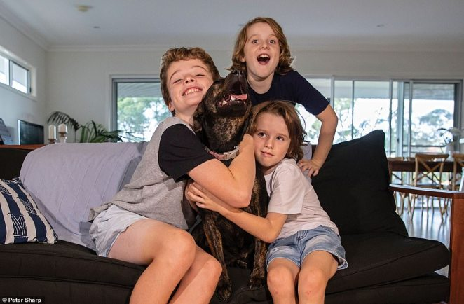 Saturn was brought to Sydney Dogs and Cats Home limping in pain, with no collar and no micro-chip. An examination revealed Saturn had a ruptured partial cruciate ligament which needed a splint to stabilise the damaged joint and plenty of rest until it healed. Saturn spent four months in the home before the right family (pictured) appeared and took her home