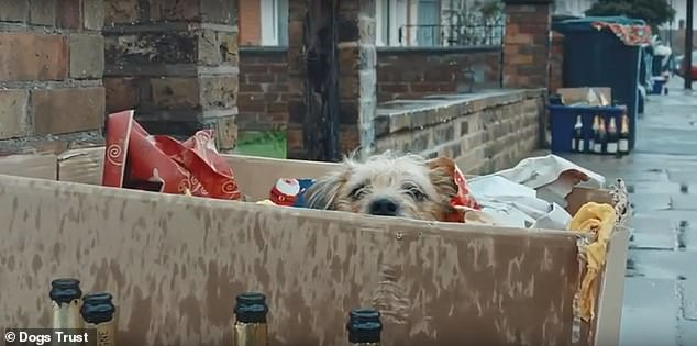 But despite the charity's initially warm message, things quickly turn sour as a real life 'Corky' is abandoned on the side of the road with the empty wine bottles