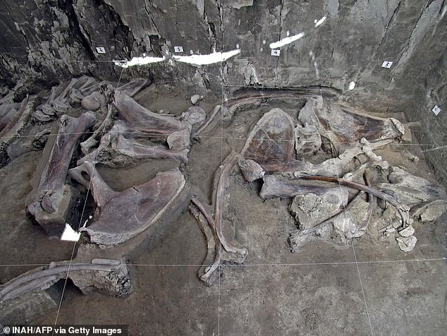Remains of two other species that disappeared in the Americas - a horse and a camel - were also found
