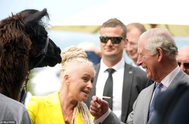 Charles laughed as the llamas, who usually give visitors rides around the town, were ushered into place for a picture during his stop inKaikoura on Saturday