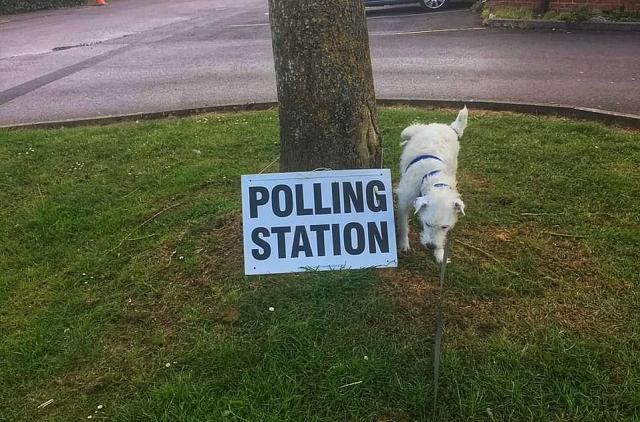 Barney the dog wasn't very impressed with election day and decided to urinate on a tree which had a polling station sign resting on it