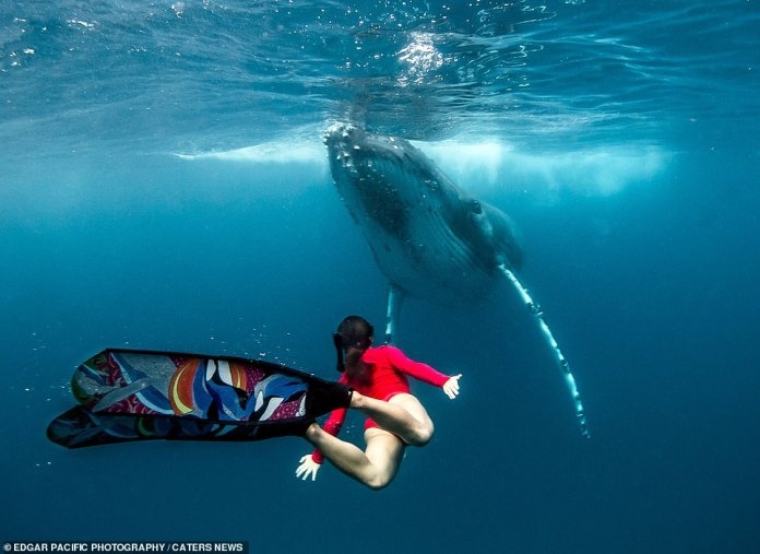As the whale surfaces, Alice mimics the whale and spreads her arms to curve up towards the surface. She was photographed synchronising her swimming with the humpback whale